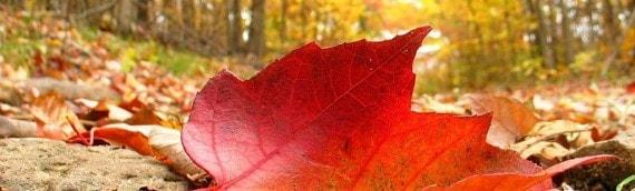 Otoño en Colorins… Jugamos con las hojas